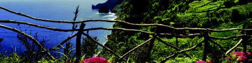 Madeira Transfers.net